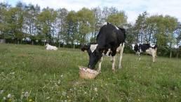 Ferme de la lugy vache