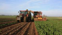 tracteur champ endives bayart