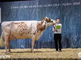 Benjamin Lepoint et vache
