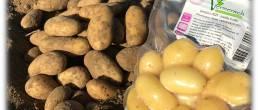 pomme de terre et sachet de pomme de terre grenaille cuite