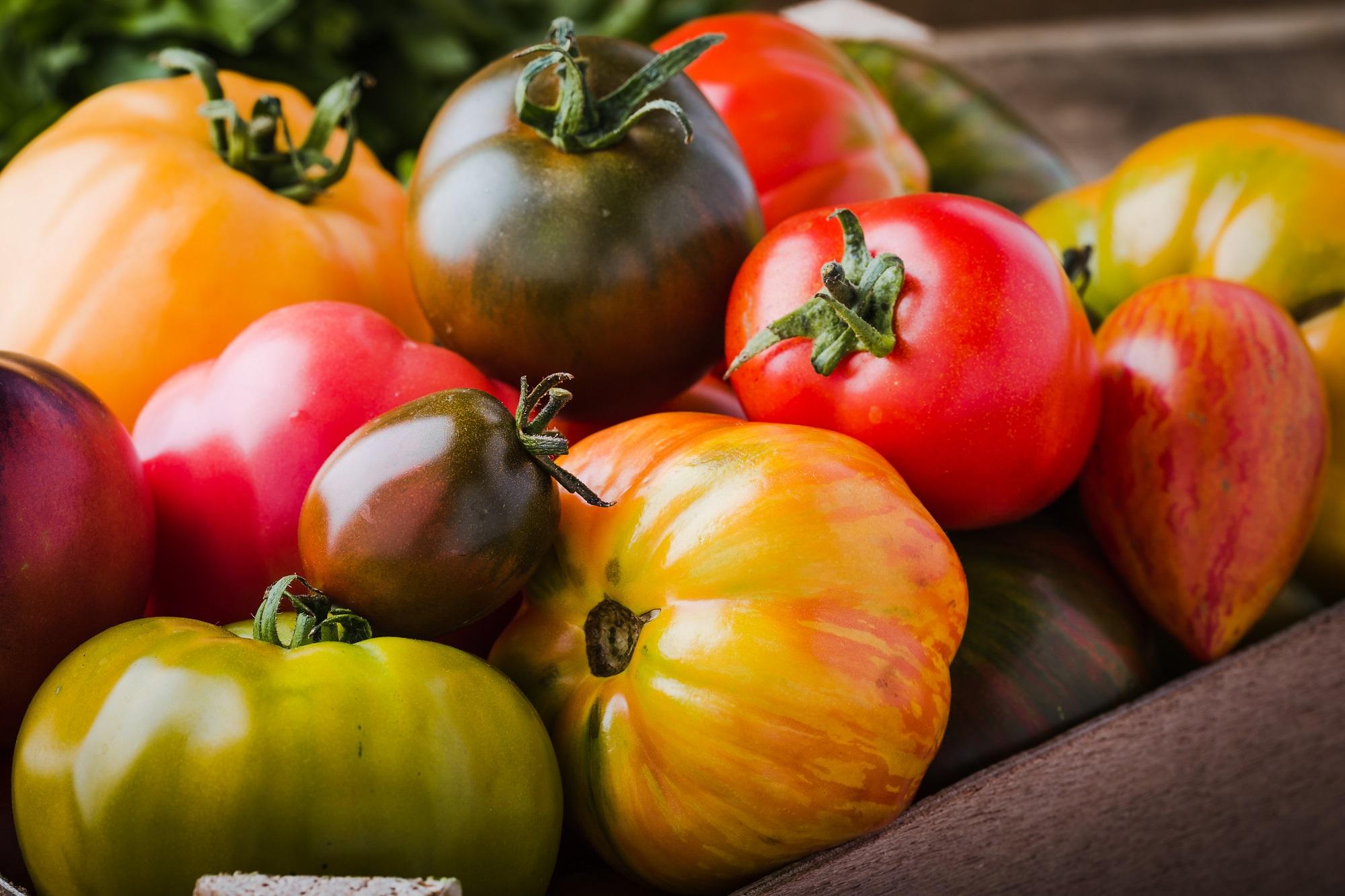 Tomates anciennes de couleurs